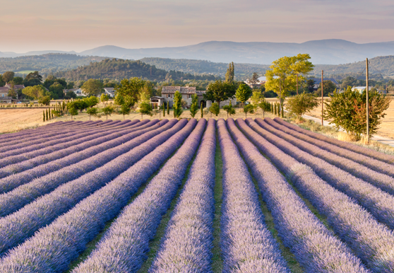 Hilltop Villages of Provence Cycling